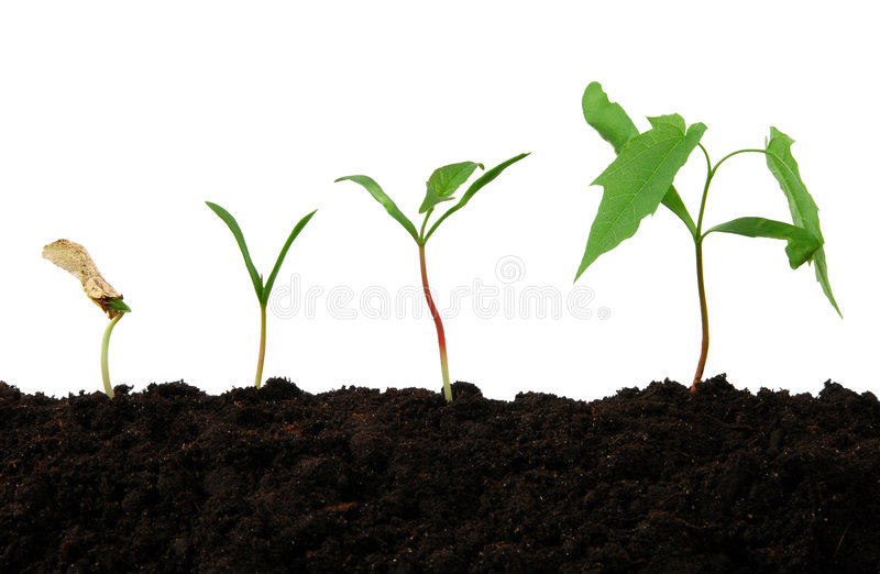 Download Growth stock image. Image of leaves, stages, young, development - 9324451