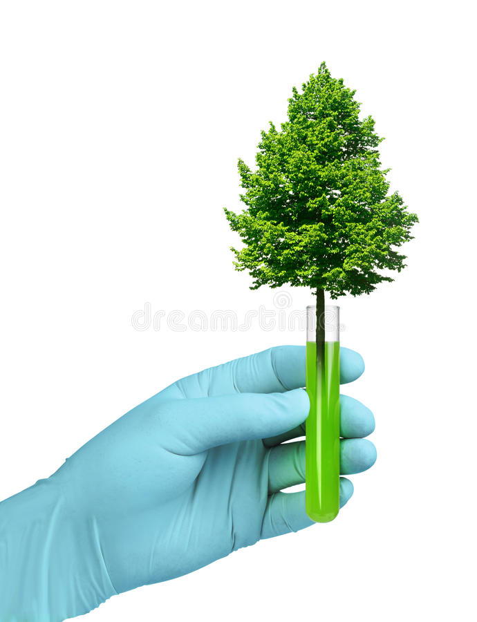 Growth in biotech test tube. Biotechnology concept, tree growing in test glass tube royalty free stock photography
