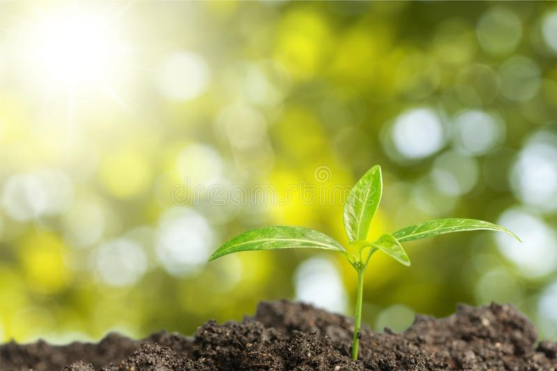 Growth stock photography