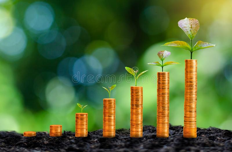 The growth of gold coins has a natural green background tree. stock image