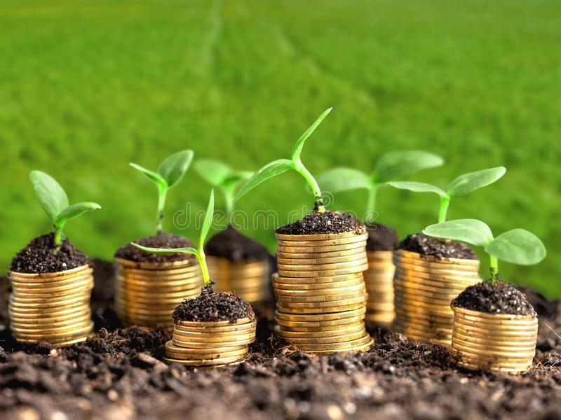 Growth, green, business. Growth green business money investment prosperity concept royalty free stock photos
