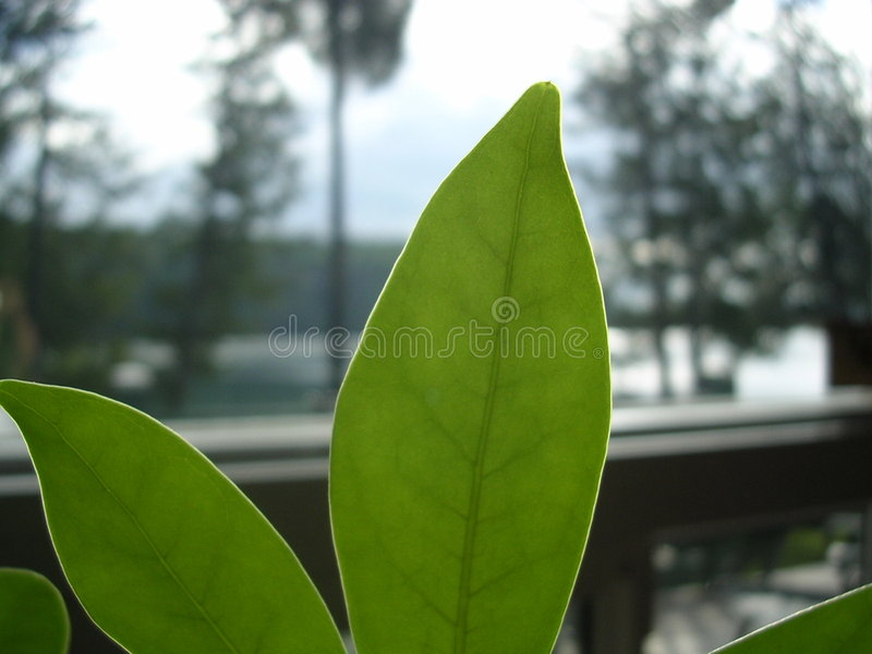 Growth of Greens royalty free stock images