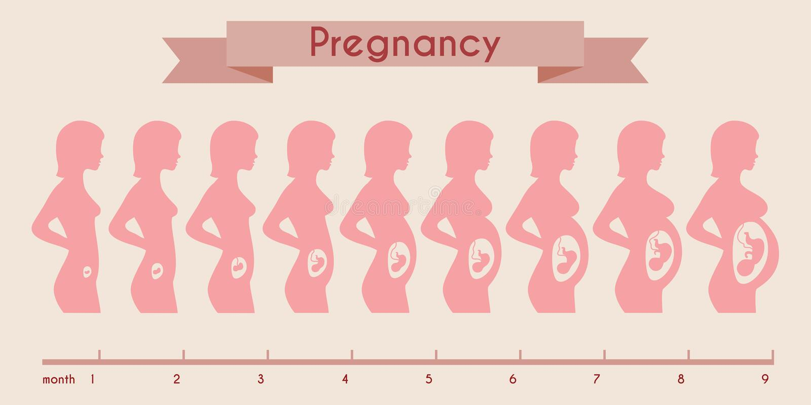 Growth of human fetus with female silhouette in vector illustration