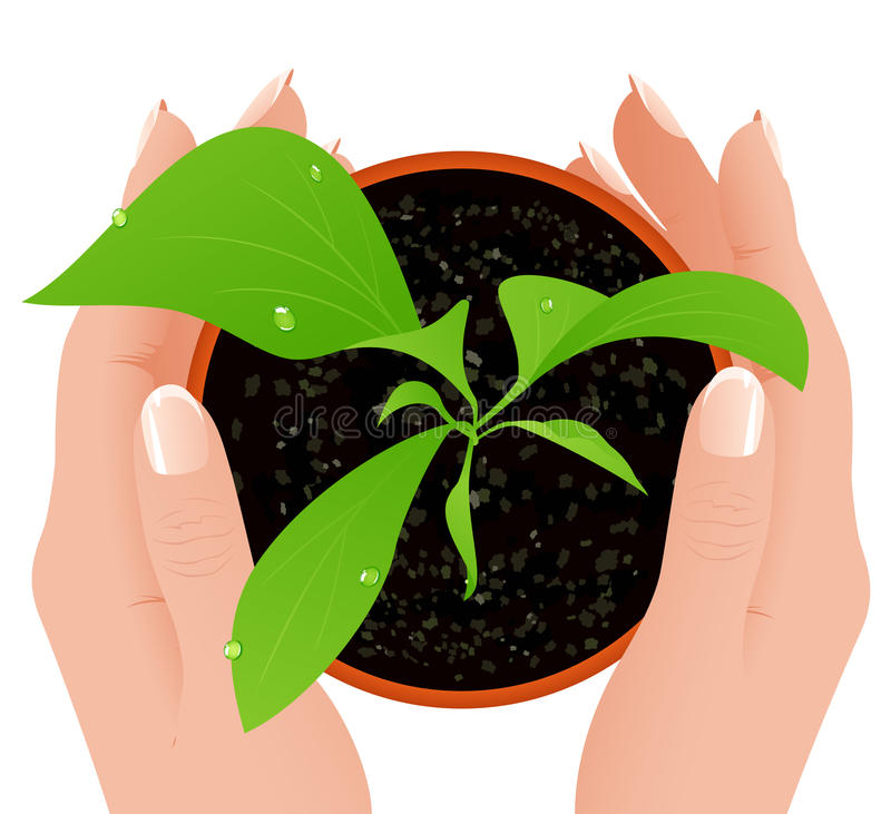 Download Growth in human hands stock vector. Illustration of leaf - 13023817