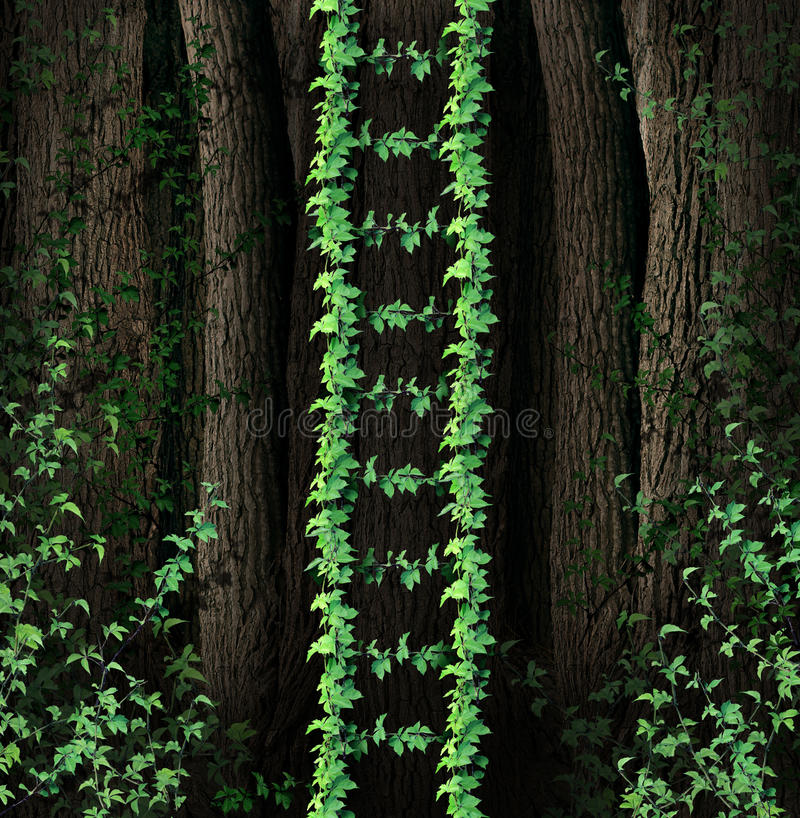 Growth Ladder. And a symbol of a new growing steps to success business concept as a group of green vines in a thick forest coming together to form a upward path stock illustration