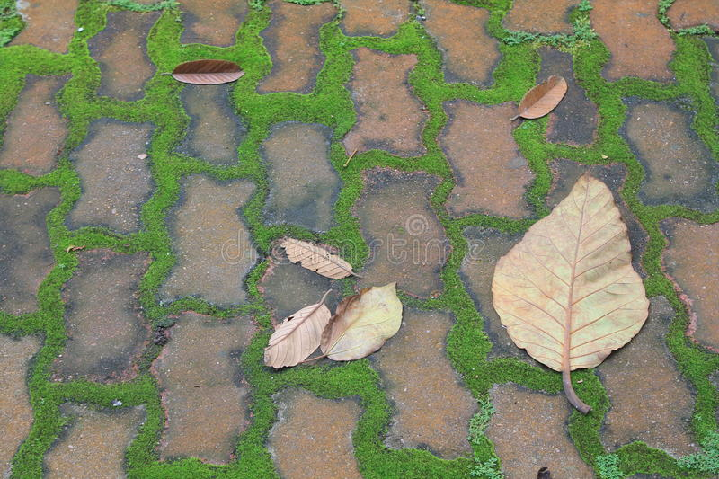 Growth and leaves on pavement royalty free stock photo