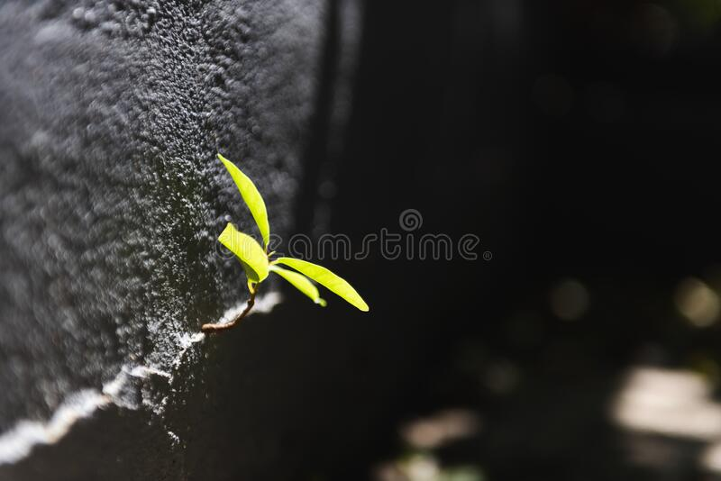 Growth of new life from concrete. With life stock images