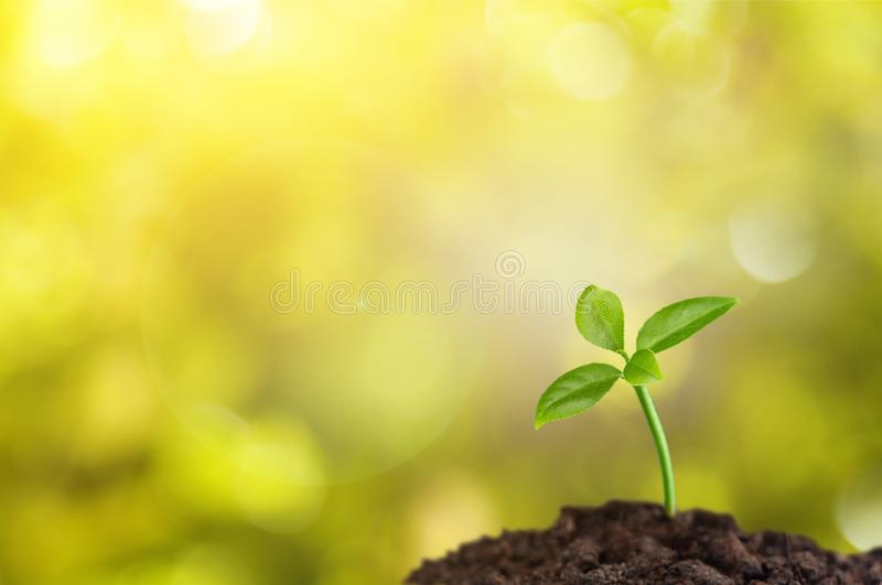 Growth royalty free stock image