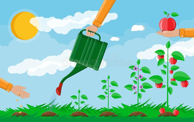 Growth of plant, from sprout to fruit. Planting tree. Seedling gardening plant. Timeline. Grass, sky with clouds and sun. Flat style vector illustration vector illustration