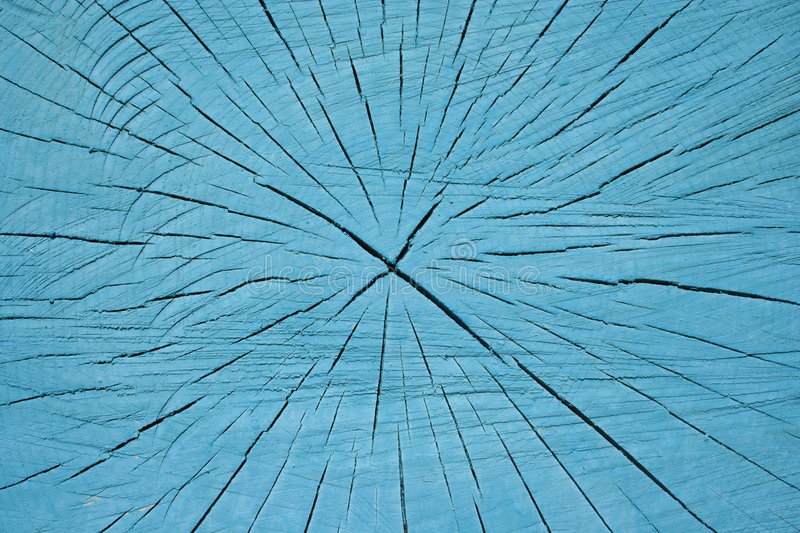 Growth rings and cracks royalty free stock image