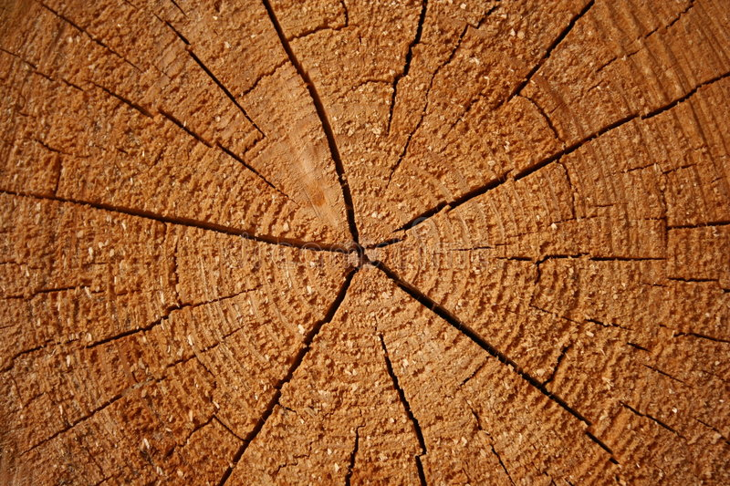 Download Growth Rings On A Log Royalty Free Stock Images - Image: 120099