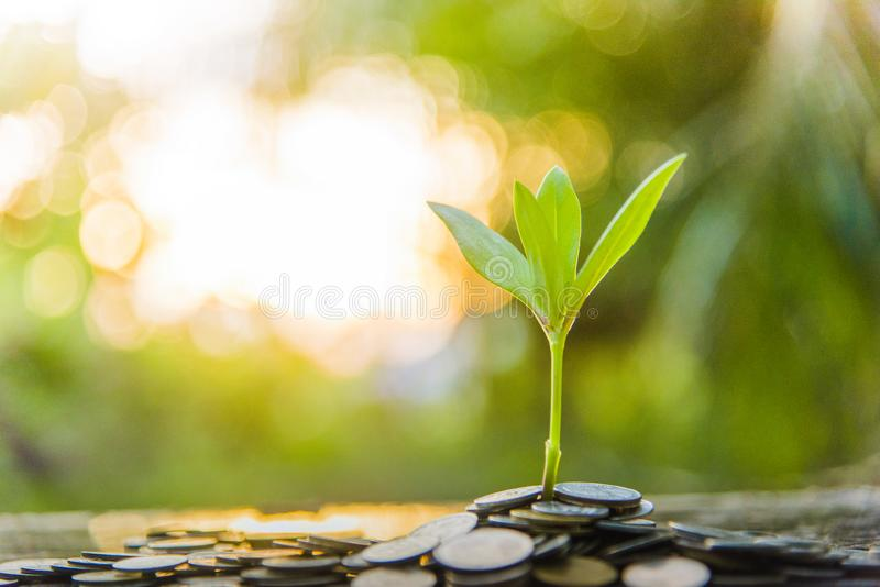 Growth tree Green background with black clay royalty free stock photos