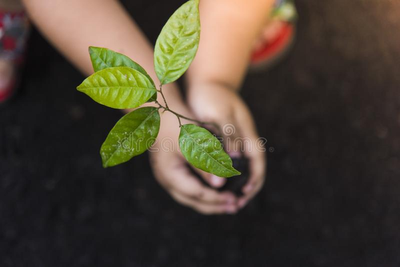Growth tree Green background with black clay.Trees with money, saving money and growing hands. royalty free stock photo