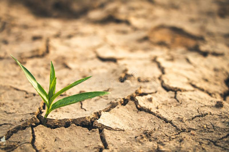 Growth of trees in drought, Living with tree drought royalty free stock photography