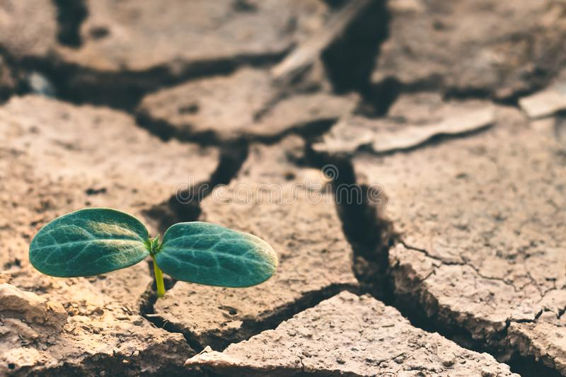 Growth of trees in drought, Living with tree drought stock image