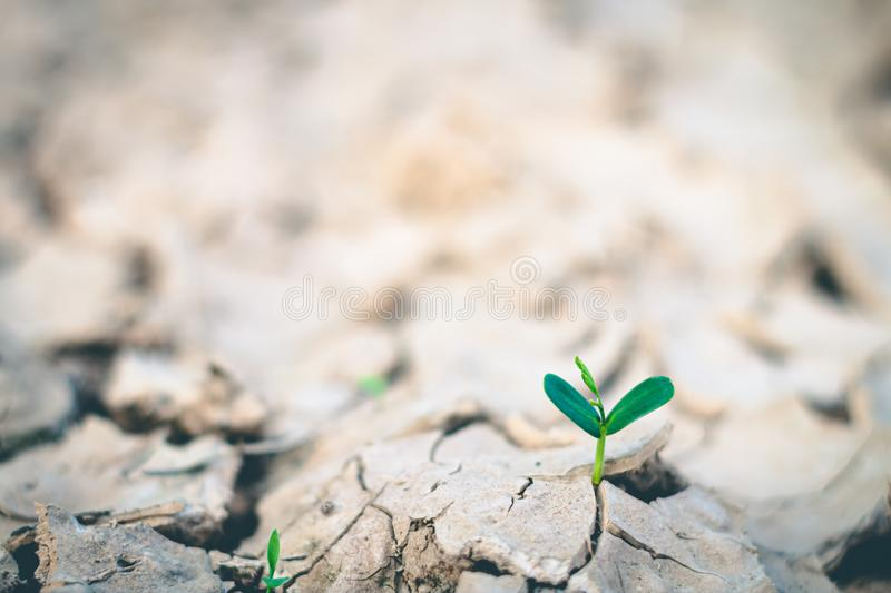 Growth of trees in drought, Living with tree drought royalty free stock photo
