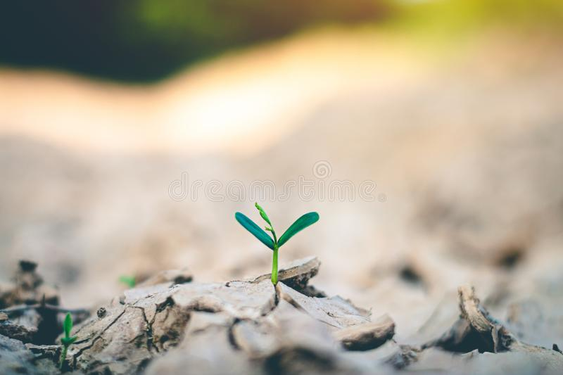 Growth of trees in drought, Living with tree drought stock photos