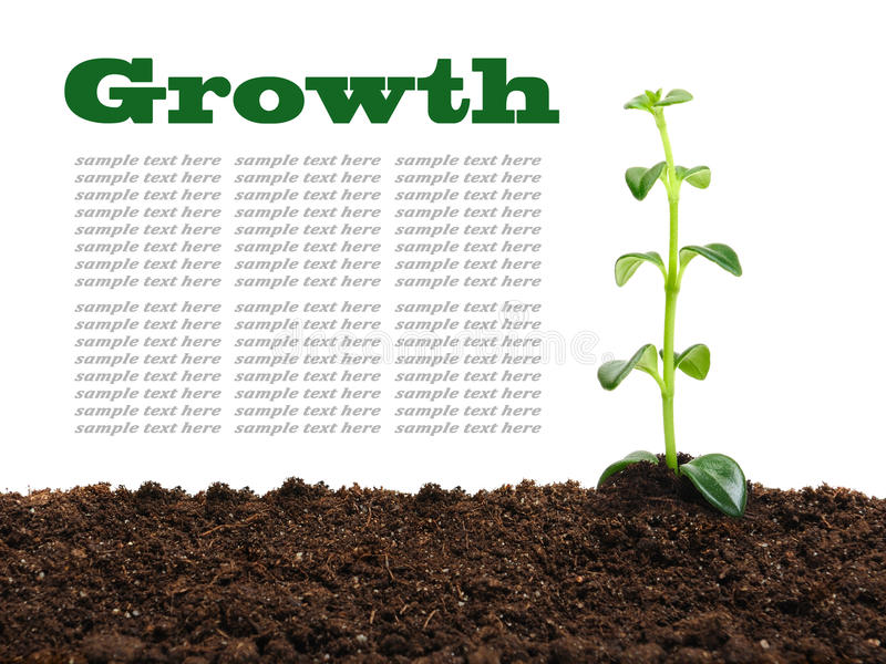 Download Growth stock photo. Image of agrarian, closeup, concept - 37517648
