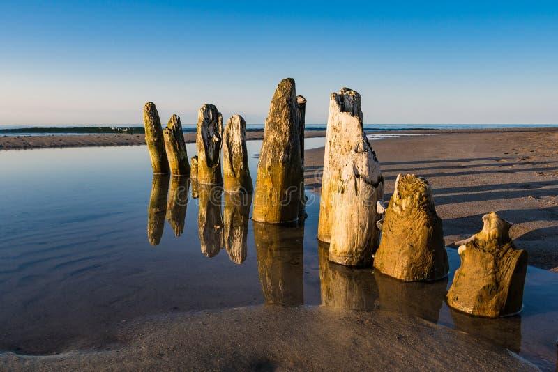 Groyne na costa do mar Báltico fotos de stock