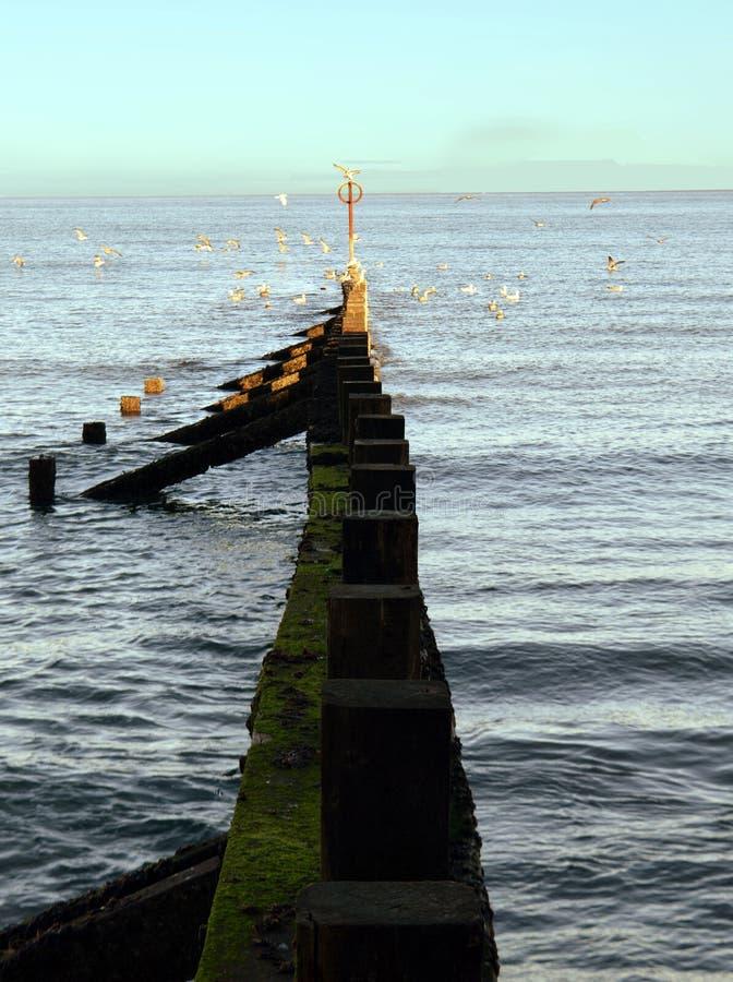 Groyne nabrzeżny defence przy Aberdeeen plażą, Szkocja zdjęcia stock