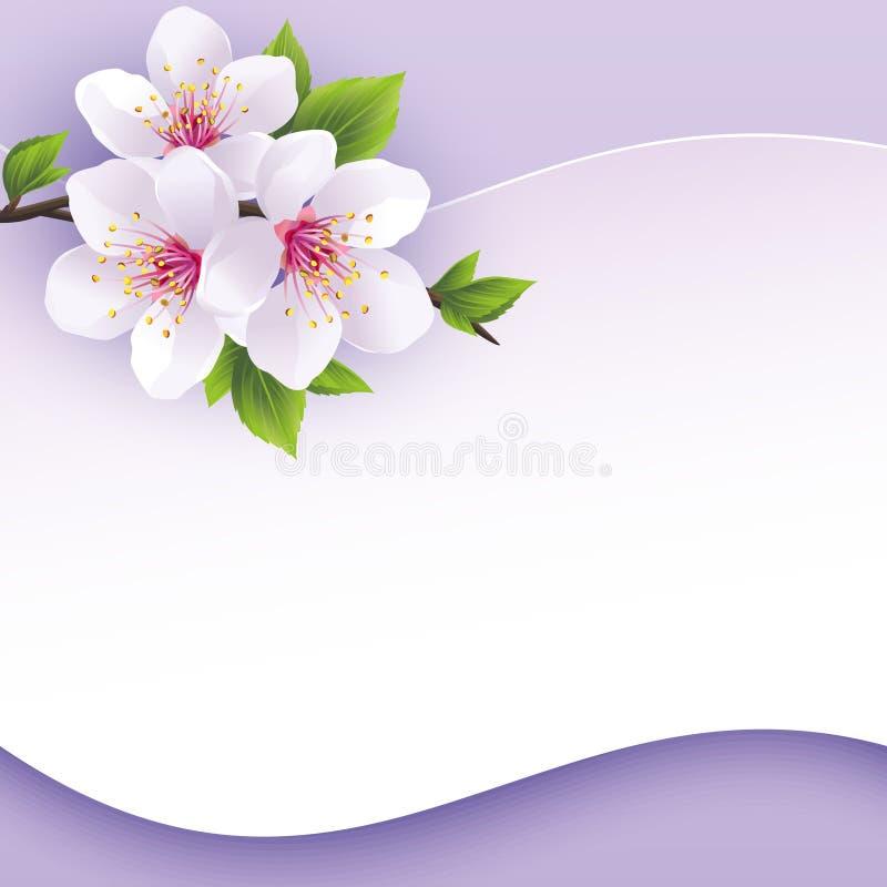 Gruß- oder Einladungskarte mit Niederlassung von Kirschblüte vektor abbildung