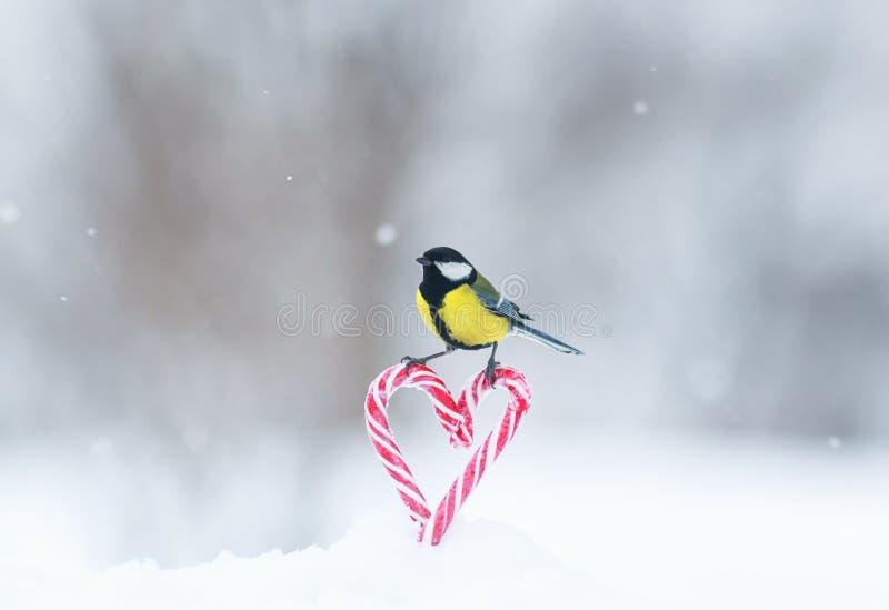 Grußkarte mit netter kleiner Vogelmeise fliegt zu einem Rahmen von roten Schatz-förmigen Lutschern im weißen Schnee am Valentinst stockfotografie