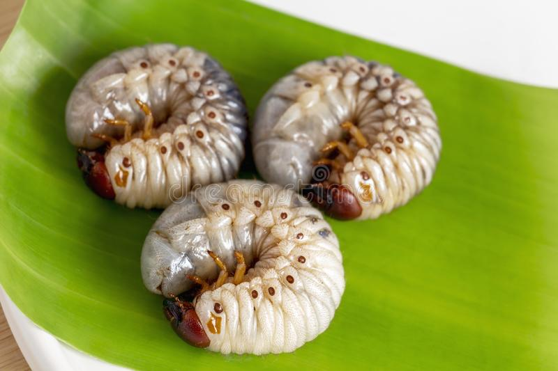 Grub Worm or Oryctes Rhinoceros Beetle. Insects food for eating cooked larva fried or baked on banana leaf in plate, it is good. Source of protein which edible stock images