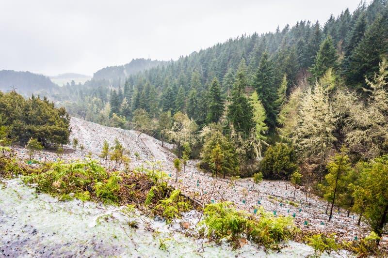 Gruby lód i śnieg na drodze do Pico Ruivo, góry Madeira, Portugalia obraz stock
