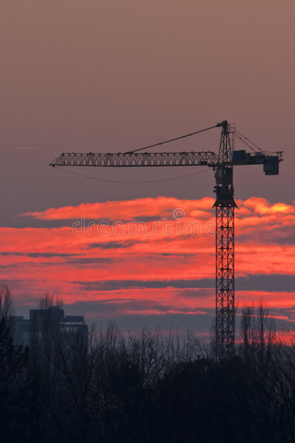 Grues 3 images stock
