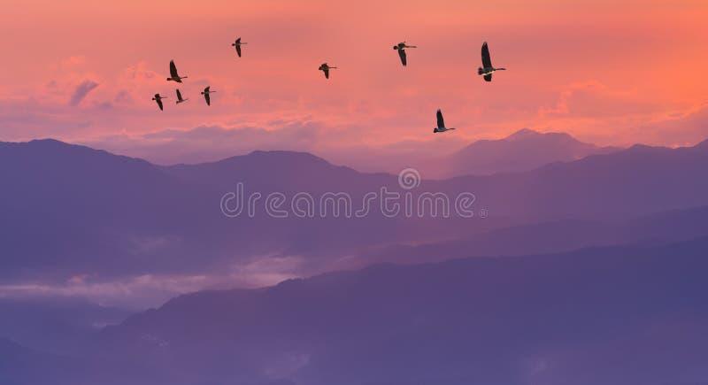 Grues de Sandhill silhouettées dans le lever de soleil image libre de droits