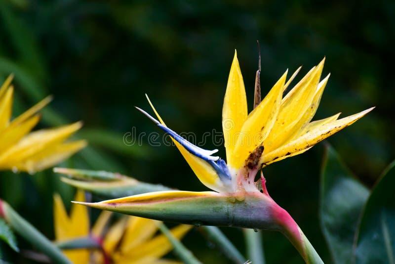 Gruidae в саде Kirstenbosch национальном ботаническом стоковые фотографии rf