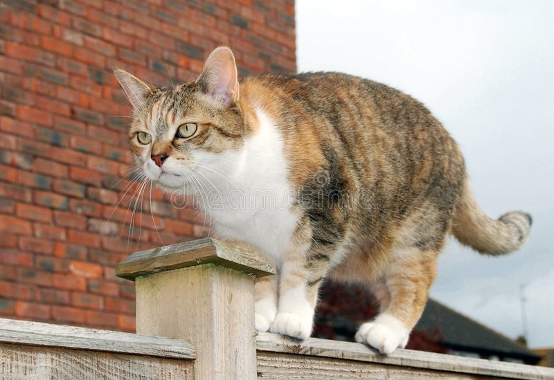 Download Grumpy cat on garden fence stock photo. Image of eyes - 7571692