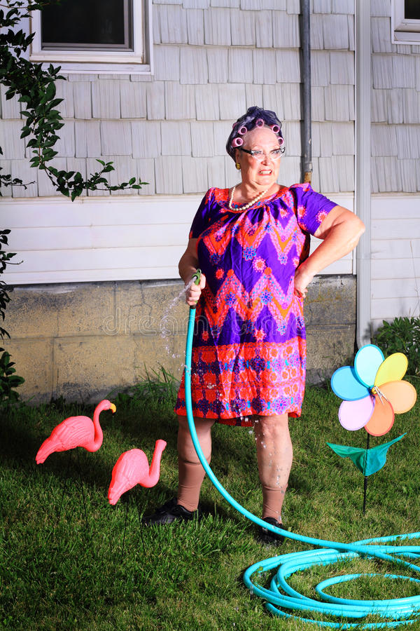 Grumpy granny dislikes yard work. Silly image of a grumpy senior gray haired granny lady wearing cat eye glasses, a muumuu dress, pearls and curlers in her hair stock photo