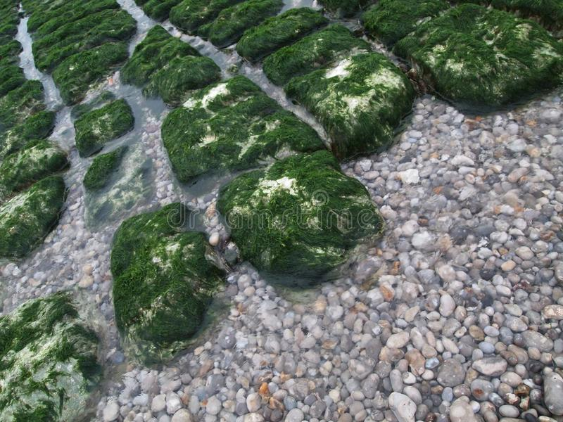 Grunda stenar t?ckas med ljusa alger arkivfoto