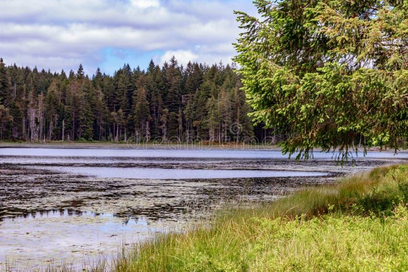grunden av trädet längs bankerna av ett liljablock fyllde sjön royaltyfri fotografi