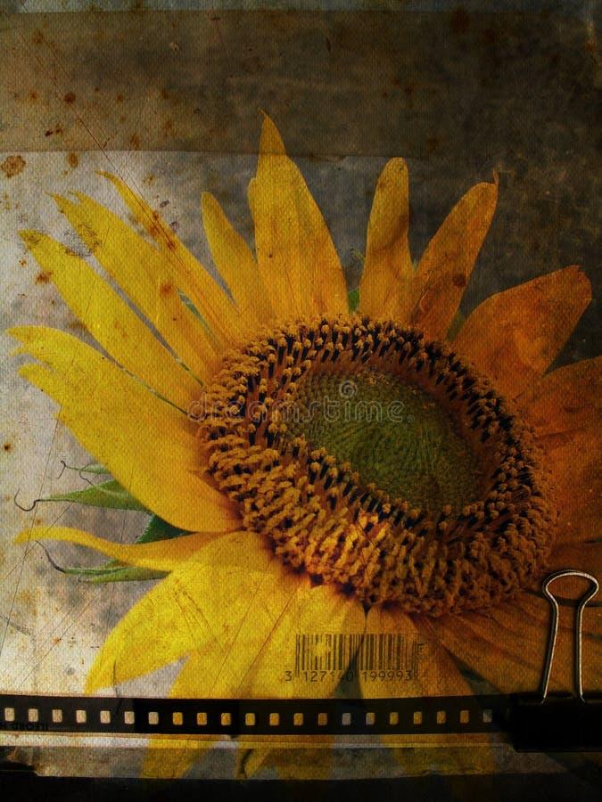 grunge明信片向日葵 向量例证