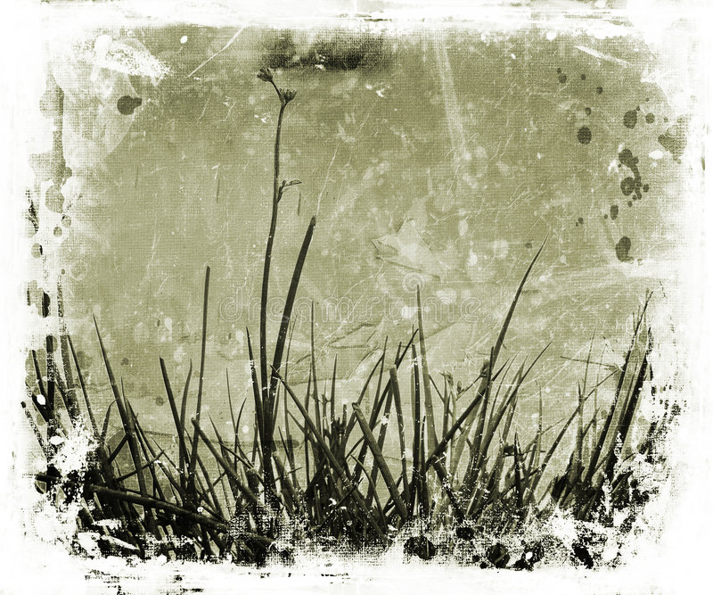 grunge φύση στοκ εικόνα με δικαίωμα ελεύθερης χρήσης