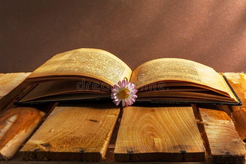 Grunge цветка деревянной доски маргаритки книги vin открытого старого винтажного пакостное стоковые фото