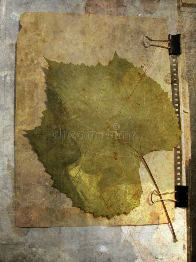 Grunge abstract background with grape leaf. Mixed media illustration of grunge paper background with grape leaf vector illustration