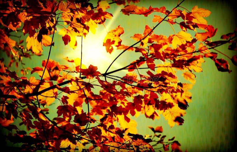 Download Grunge autumn stock image. Image of bright, dark, flora - 15576715