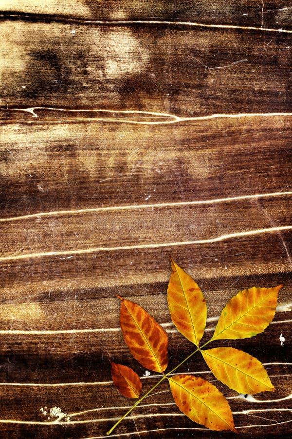 Download Grunge background stock photo. Image of plant, decoration - 26629608
