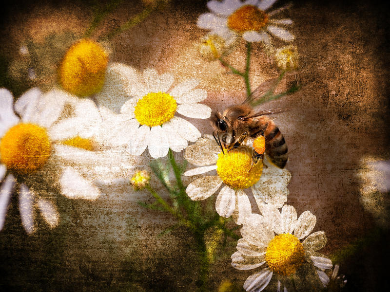 Grunge background with daisies stock illustration