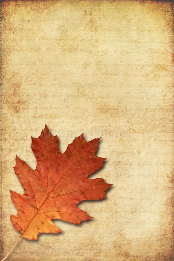 Download Grunge Background With Oak Autumn Leave Stock Illustration - Image: 25306521
