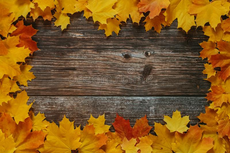 Grunge background of old boards with a frame of autumn yellow dry maple leaves stock photography