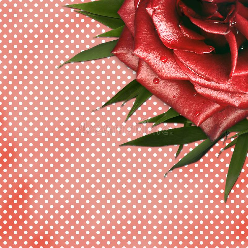 Download Grunge Background With Red Rose For Design Stock Illustration - Illustration of card, petal: 14248256