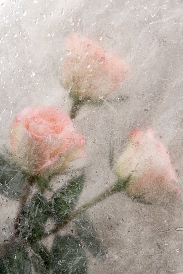 Grunge background with roses royalty free stock photo