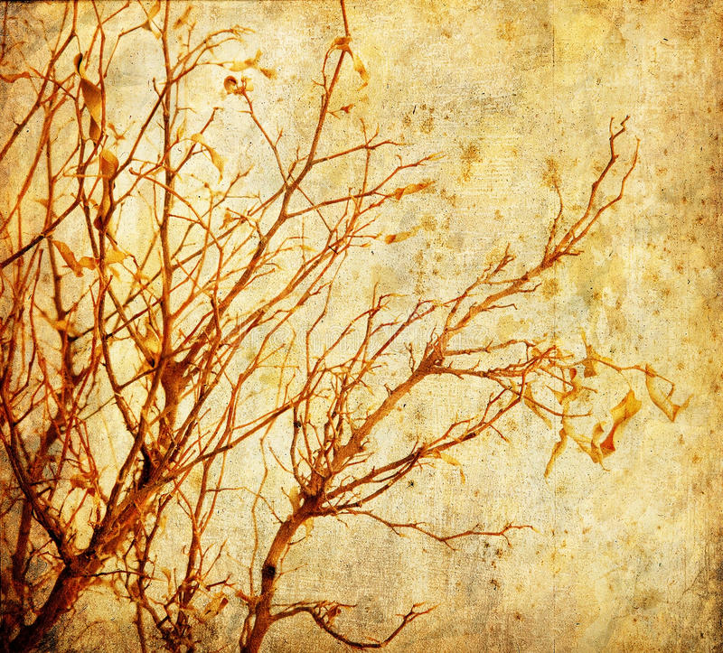Grunge Baum stockfotos