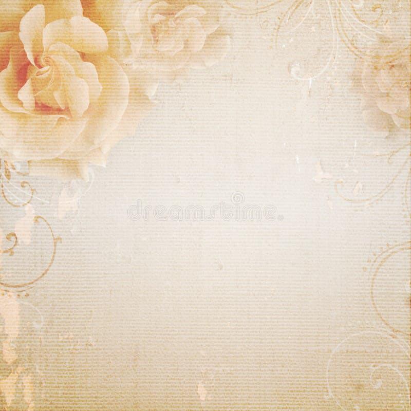 Grunge beżowy ślubny tło z różami zdjęcia royalty free