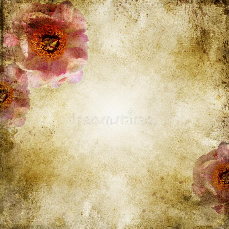Grunge beżowy ślubny tło z różami obraz stock