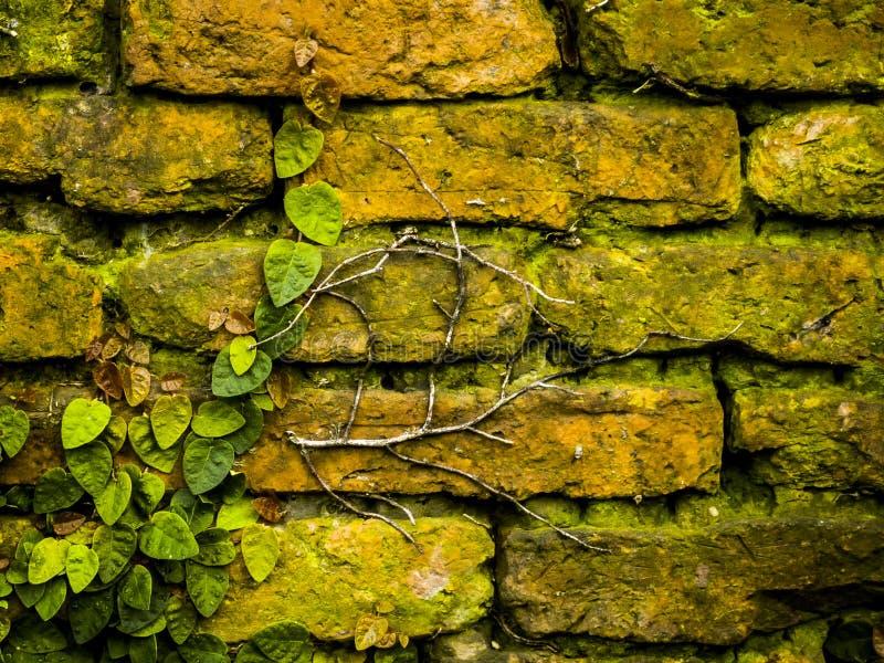 Grunge brick wall royalty free stock image